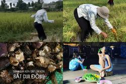 Hái rau - gặt lúa - bắt cua đồng, H'Hen Niê được phong 'hoa hậu có một không hai trên quả đất'