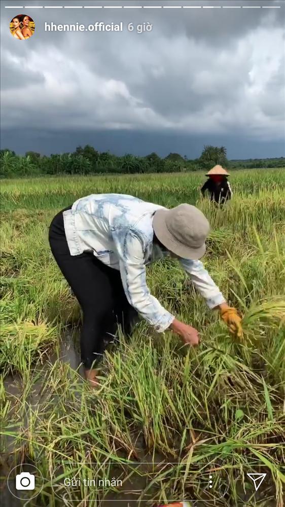 Hái rau - gặt lúa - bắt cua đồng, HHen Niê được phong hoa hậu có một không hai trên quả đất-3