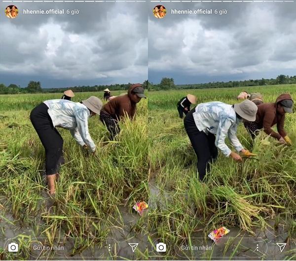 Hái rau - gặt lúa - bắt cua đồng, HHen Niê được phong hoa hậu có một không hai trên quả đất-4
