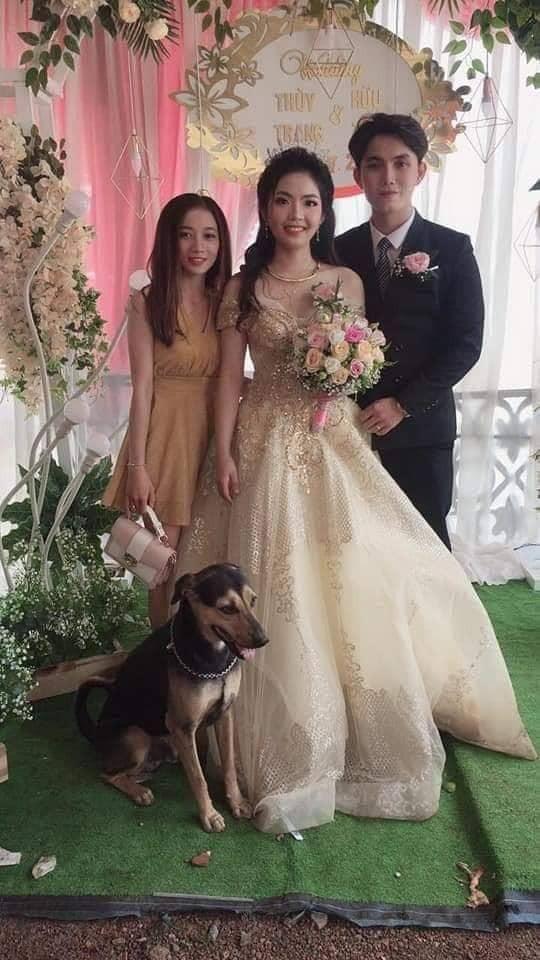 VZN News: Cô dâu trẻ ngầu nhất quả đất, chạy hẳn ra đường lôi cổ thú cưng về chụp ảnh cưới cùng-3