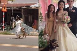 Cô dâu trẻ ngầu nhất quả đất, chạy hẳn ra đường 'lôi cổ' thú cưng về chụp ảnh cưới cùng