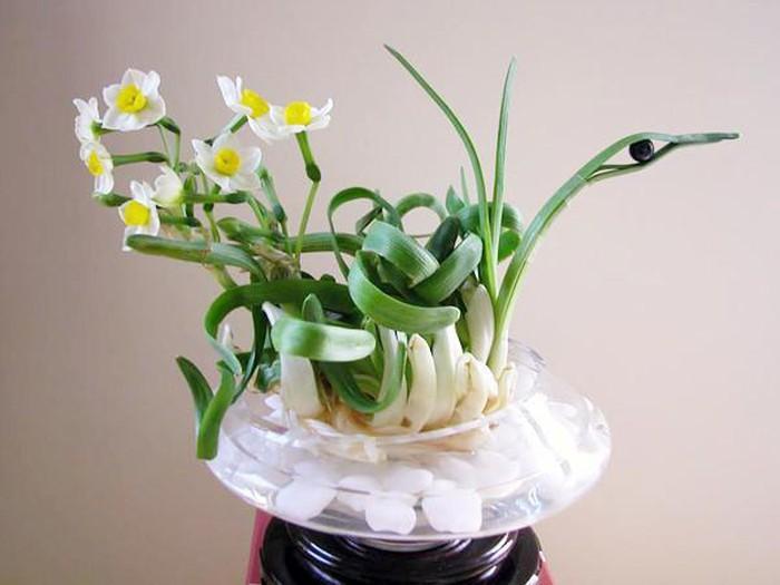5 loại hoa bày phòng khách hút vượng khí, rước thêm tài lộc-2