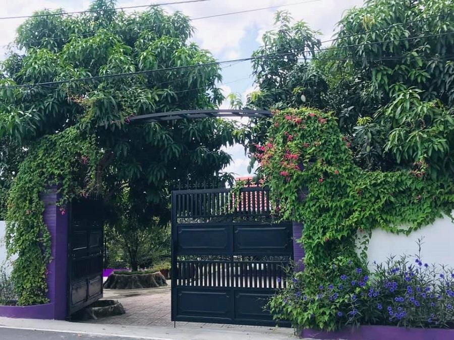 Cư dân mạng bấn loạn vì căn nhà màu tím lịm nổi bật cả một vùng trời-1