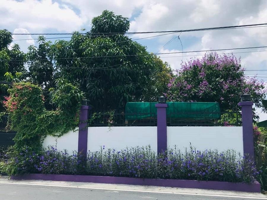 Cư dân mạng bấn loạn vì căn nhà màu tím lịm nổi bật cả một vùng trời-2