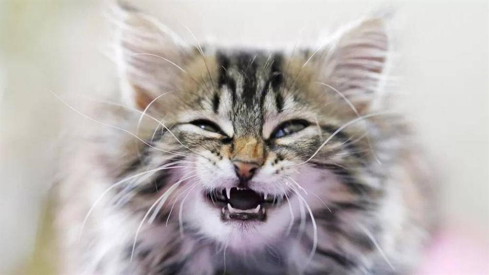 Người đàn ông ở Cà Mau tử vong sau 3 tháng bị mèo cắn-1