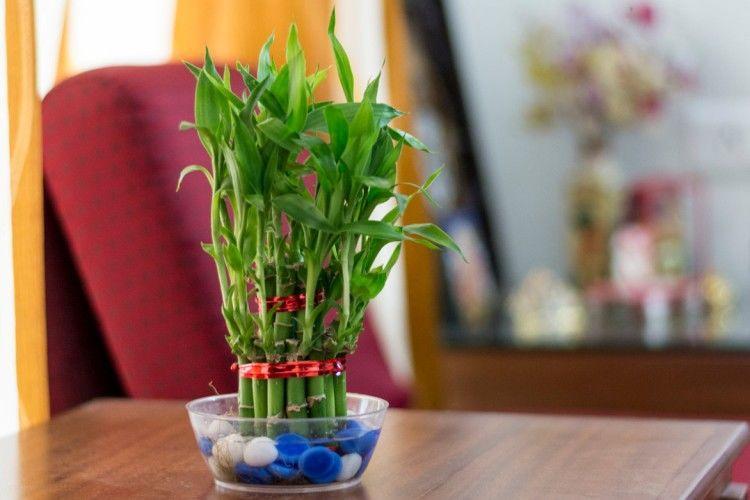 6 loại cây phú quý nên trồng trong nhà giúp lọc không khí, chiêu tài đón lộc-5