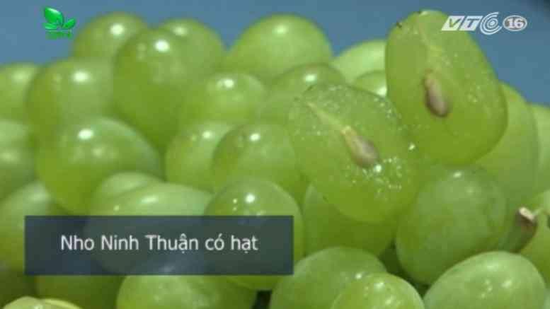 Cách phân biệt nho xanh Trung Quốc với nho xanh Ninh Thuận để chị em tránh mua nhầm-3