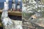 Dân mạng chết cười với hình ảnh chú mèo xuất hiện ở Cầu Vàng: Trẫm là 'hoàng thượng', cần gì phải mua vé!