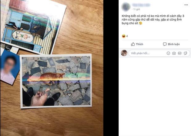 Dân mạng chết cười với hình ảnh chú mèo xuất hiện ở Cầu Vàng: Trẫm là hoàng thượng, cần gì phải mua vé!-6