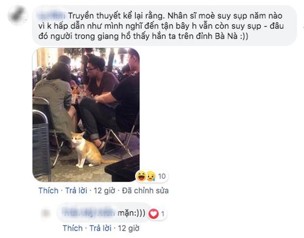 Dân mạng chết cười với hình ảnh chú mèo xuất hiện ở Cầu Vàng: Trẫm là hoàng thượng, cần gì phải mua vé!-8