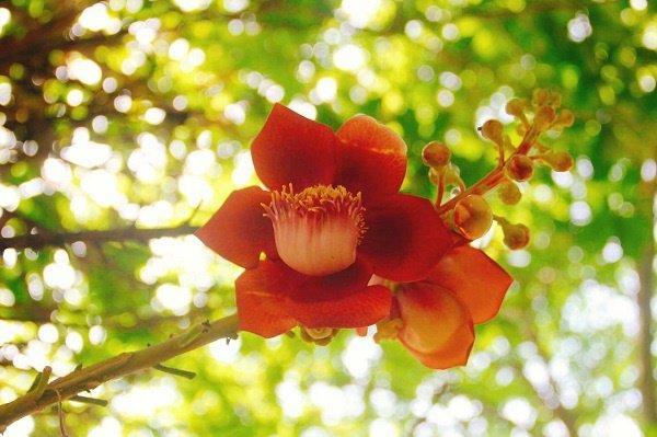5 loại cây trồng ban công giúp chiêu tài, vượng vận nhà nào cũng nên đặt-3