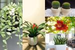 5 loại cây trồng ban công giúp chiêu tài, vượng vận nhà nào cũng nên đặt