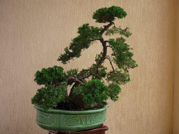 Những loại cây không nên đặt trong nhà 3 tháng cuối năm kẻo tiền đội nón ra đi-3