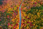 Ngất ngây con đường rừng xanh lá đỏ trên nền cát trắng đẹp như tranh-11