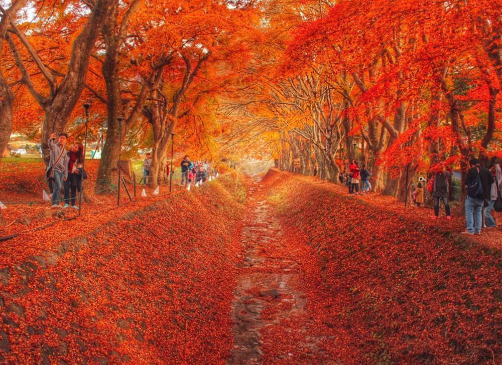 7 con đường mùa thu như chỉ có trong cổ tích-2