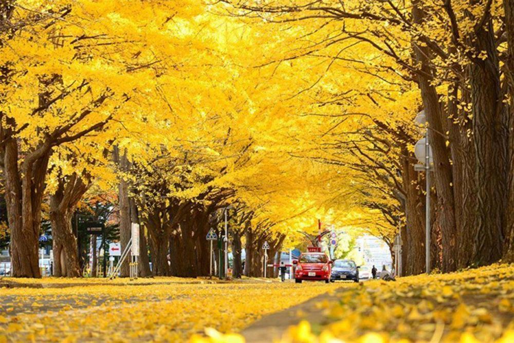 7 con đường mùa thu như chỉ có trong cổ tích-3
