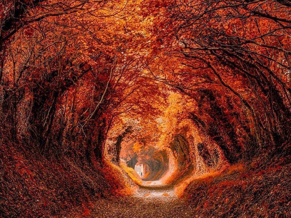 7 con đường mùa thu như chỉ có trong cổ tích-4