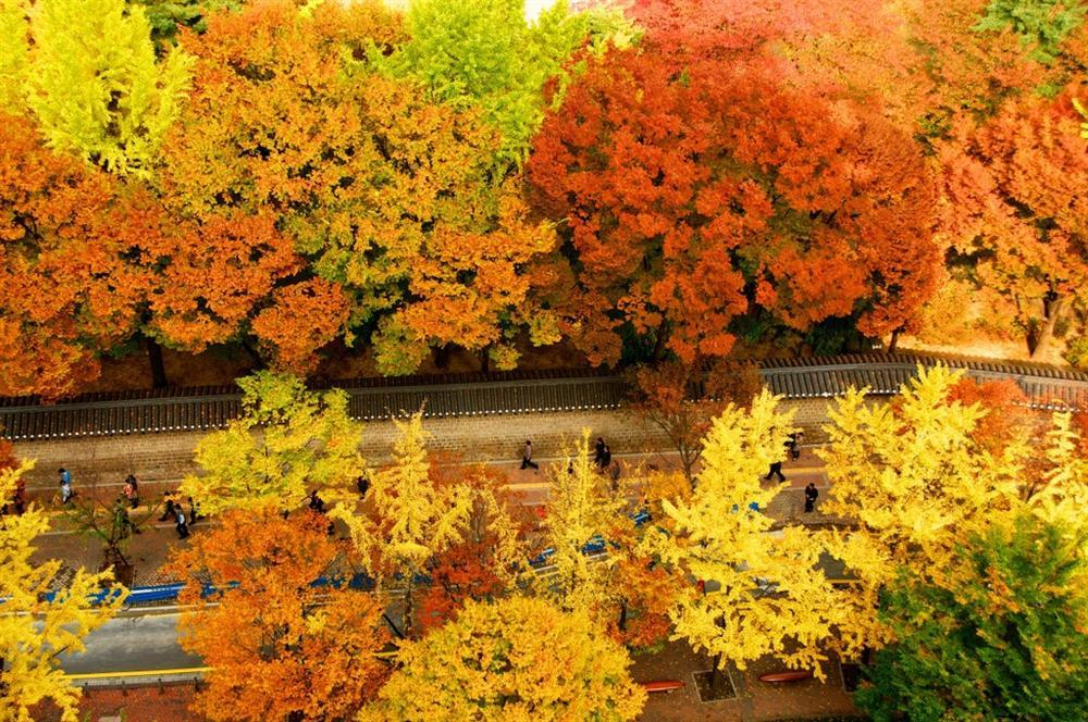 7 con đường mùa thu như chỉ có trong cổ tích-6