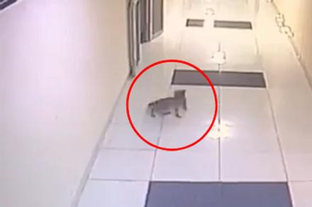 Clip: Mèo cưng ra ngoài lúc nửa đêm bị hàng xóm đập chết vì 'mèo ở hành lang tức là mèo hoang'
