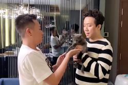 Trấn Thành - Hari Won 'khóc nức nở' khi quyết định tặng mèo Chi Pu cho Anh Đức