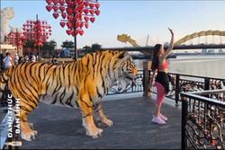 Trào lưu mới 'đổ bộ': Giới trẻ đua nhau làm 'sen' cho hổ