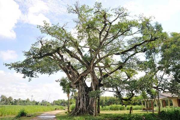 5 loại cây tuyệt đối không trồng trước nhà 3 tháng cuối năm, có phải chặt ngay mới tốt-4