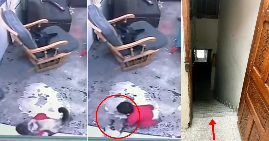 Clip: Thấy em bé sắp ngã xuống cầu thang, mèo nhanh trí lao ra giải cứu trong gang tấc-2