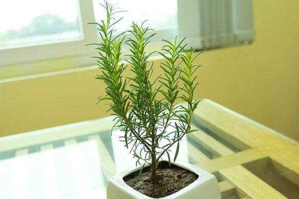 Trong bếp trồng ngay cây này, tiền thi nhau đổ ào ào, Thần Tài ưng ý xin gì cũng cho-5