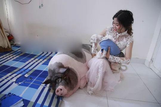 Chuyện lạ: Trước khi về nhà chồng, cô dâu chăm chú heo nặng 160kg trong phòng-1