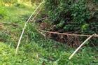 Thi thể không đầu trong vườn điều ở Bình Phước
