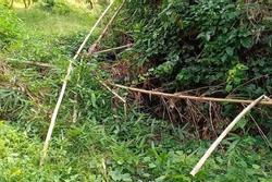Vụ phát hiện nửa thi thể trong bụi rậm: Tìm thấy phần đầu cách hiện trường ban đầu khoảng 50m
