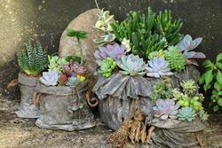 Tuổi Mùi hợp cây gì trồng trong nhà sẽ hút nhiều tài lộc, may mắn cho gia chủ?