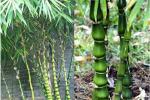 5 loại cây trồng trước nhà hút may mắn, mang tài lộc tới