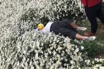 Cô gái nằm đè lên vườn cúc họa mi chụp ảnh, cư dân mạng ra sức 'ném đá' nhưng lại phì cười khi 'khổ chủ' vừa đứng lên