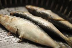 Cách chọn lựa và bảo quản thịt cá luôn tươi ngon