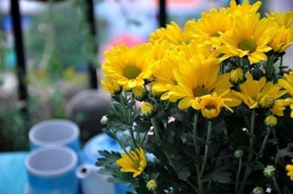 Cúng Rằm chọn đúng 5 loại hoa này, tiền tài tíu tít, buôn gì đắt nấy-2