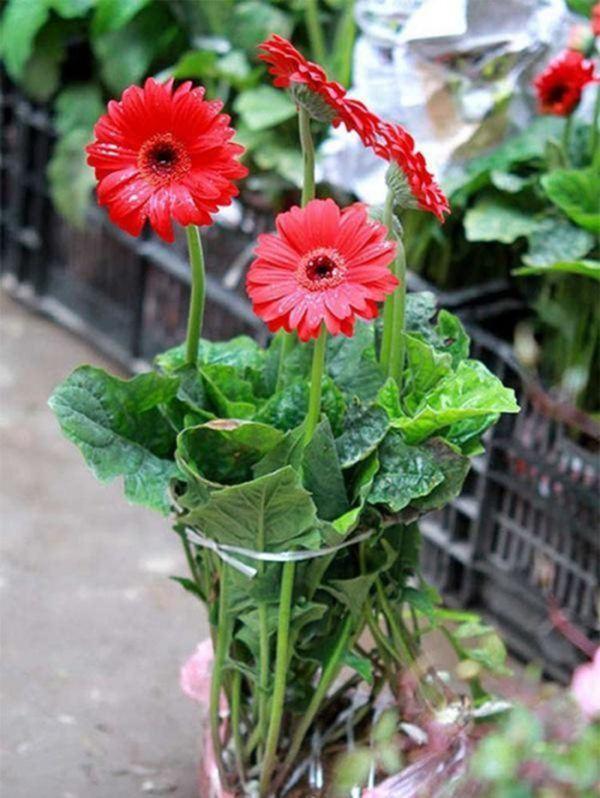 Cúng Rằm chọn đúng 5 loại hoa này, tiền tài tíu tít, buôn gì đắt nấy-5