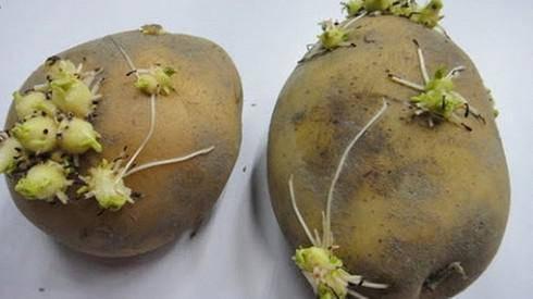 Những loại rau củ nếu không được nấu chín sẽ gây ngộ độc-2