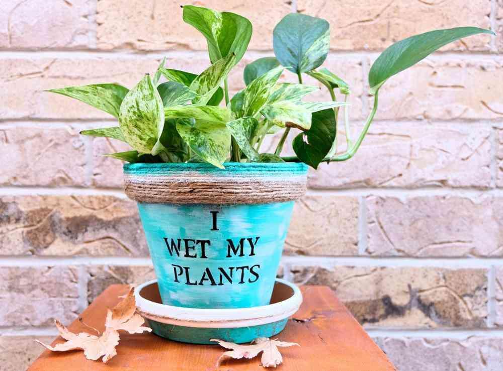 TOP 5 loài cây trồng vừa mang phong thủy lại phòng chống ung thư-2