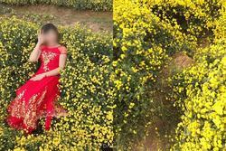 Nằm hẳn lên luống hoa cúc chụp ảnh, cô gái khiến dân mạng 'lắc đầu' ngao ngán: 'Mặc đẹp làm gì khi hành động xấu'