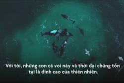 Bơi cùng hung thần biển cả ở Na Uy