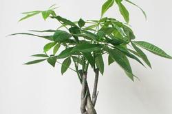 6 loại cây nghe tên đã thấy giàu, rước vào nhà cuối năm lộc đổ như thác