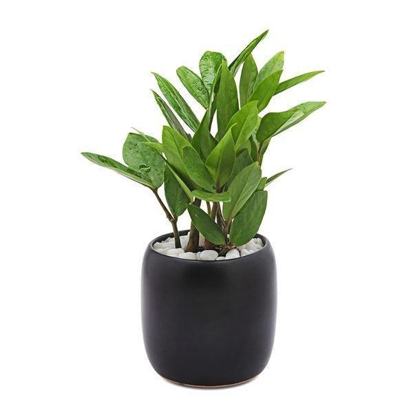 Tuổi Sửu hợp cây gì? Những loại cây giúp tuổi Sửu thêm giàu sang, phú quý-3