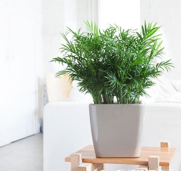 Tuổi Sửu hợp cây gì? Những loại cây giúp tuổi Sửu thêm giàu sang, phú quý-7