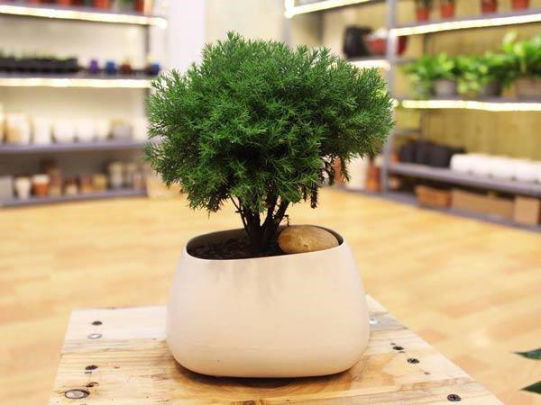 Tuổi Sửu hợp cây gì? Những loại cây giúp tuổi Sửu thêm giàu sang, phú quý-13