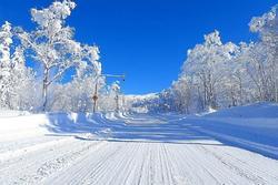 Hoa nở trong tuyết trắng rừng ở nơi lạnh âm 30 độ C