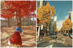 9X gây sốt với bộ ảnh mùa thu Hàn Quốc đẹp như tranh chỉ bằng chiếc điện thoại