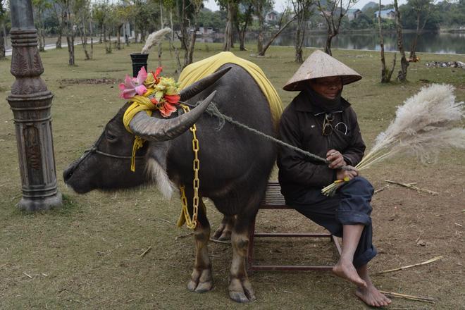 Cuộc gặp gỡ kỳ diệu của nam du khách nước ngoài cùng người đàn ông chăn trâu ở Ninh Bình sau 15 năm và câu chuyện thú vị phía sau-3