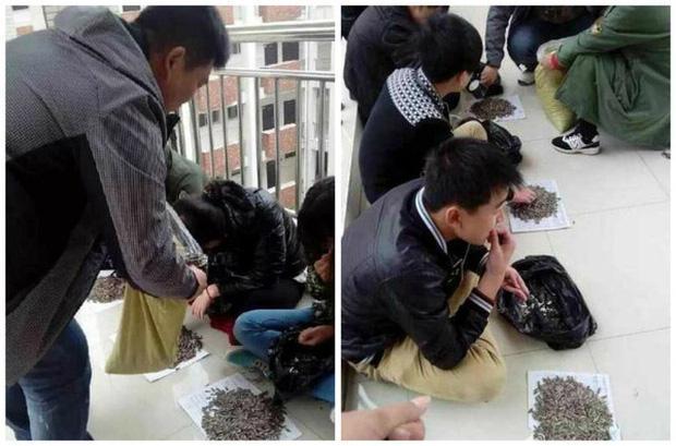 Cắn vụn hướng dương trong lớp, nhóm học sinh bị thầy giáo cao tay phạt ăn bằng hết 50kg hạt tại chỗ: Tởn tới già chưa?-1