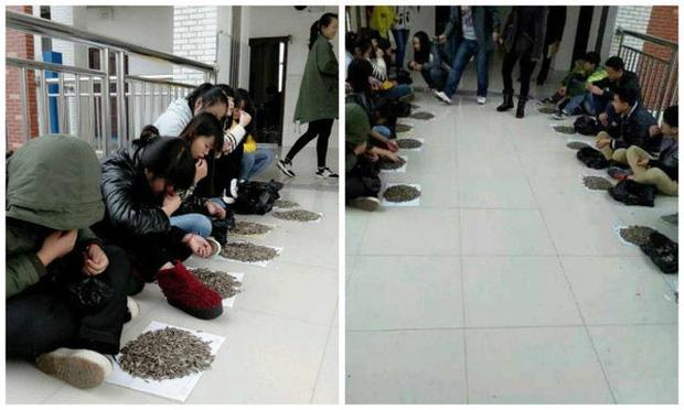 Cắn vụn hướng dương trong lớp, nhóm học sinh bị thầy giáo cao tay phạt ăn bằng hết 50kg hạt tại chỗ: Tởn tới già chưa?-2